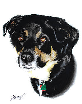 Rottweiler Mix by Ferrel Cordle