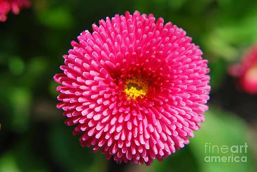 Yhun Suarez - Round Pink Flower