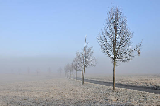 Row of trees in the morning by Matthias Hauser