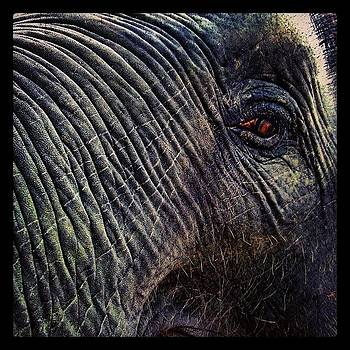 #rreens #elephant #elephantoftheday by Richard Reens