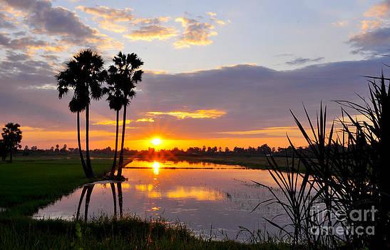 Rrice fields at sunset 2 by Tawatchai Sanajai