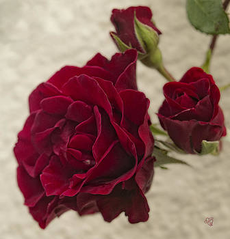 Ruby Red Rose by Barbara Middleton
