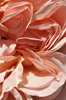 Ruffles and Ridges by Sandy Fisher