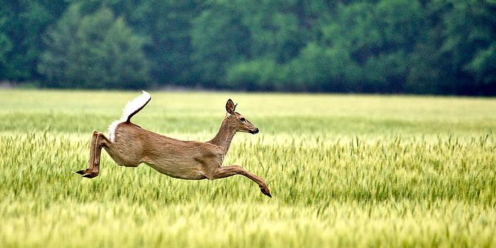 Run through a Field by Rob Morgan