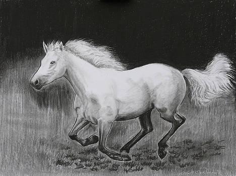 Runaway Mollie by Tomas OMaoldomhnaigh