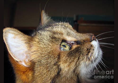 Runcius- The King Kitty by Ausra Huntington nee Paulauskaite