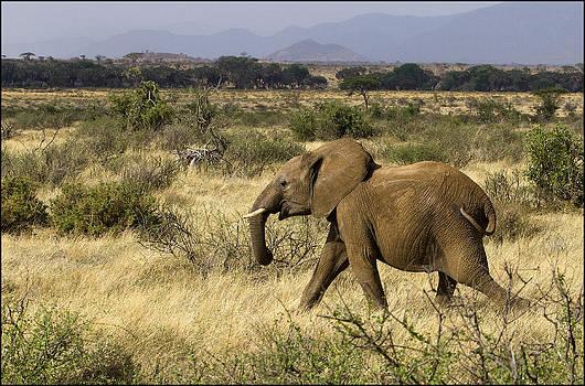 Running Elephant by Bob Falconer