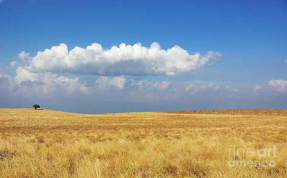 Rural field at Alentejo region Portugal by Inacio Pires