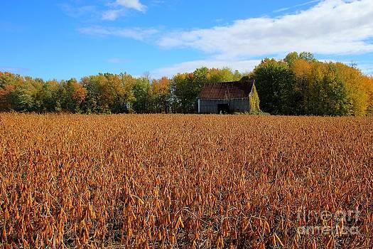 Sophie Vigneault - Rural Landscape