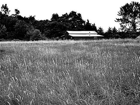 Kevin D Davis - Rural Life