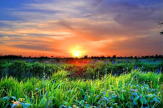 Rural Sunset Over Field by Esther Luna