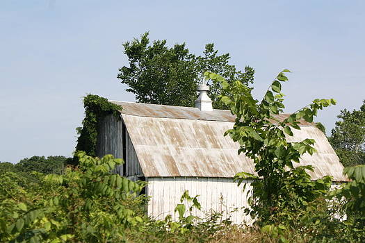 Rustic Barn by Susan Kortesmaki