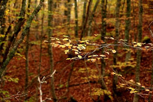 Rusty leaves by Frederic Vigne