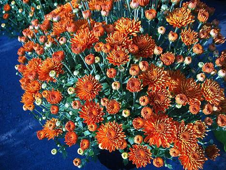 Rusty Orange Mums with Blue by Sherry Oliver