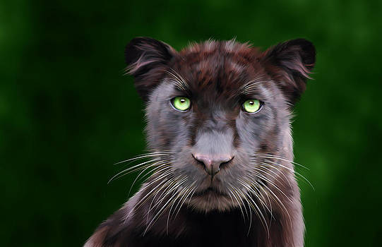 Saber by Big Cat Rescue