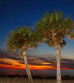 Carmen Del Valle - Sable Palm Sunset