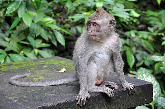Sacred Monkey Forest by Kamel Rekouane