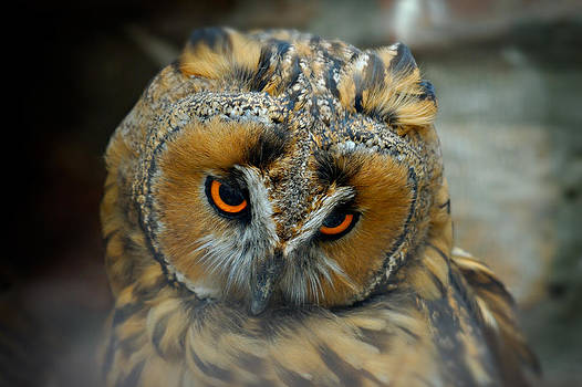 Zoran Buletic - Sad Owl