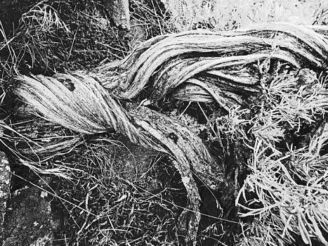 Sage Trunk in Black and White by Seth Shotwell