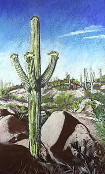 Saguaro National Park by Drusilla Montemayor