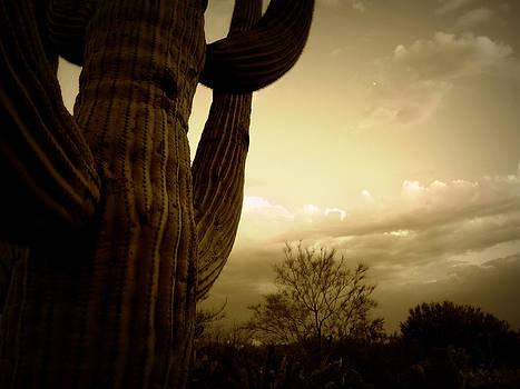Regina Arnold - Saguaro Silhouette