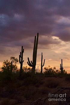 Saguaros after the storm by Patty Descalzi