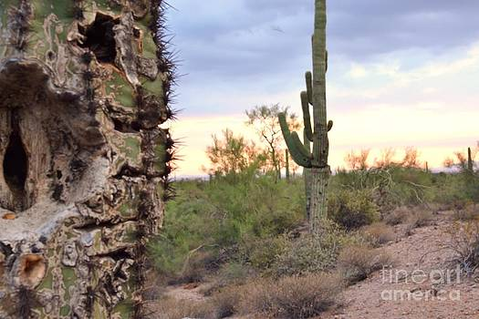 Saguaros at Sunset by Patty Descalzi