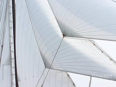 Sail by Anne Seltmann