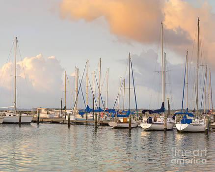 Sailboats at dawn by Carol Wood