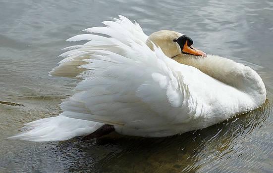 Carmen Del Valle - Sailing Along Swan