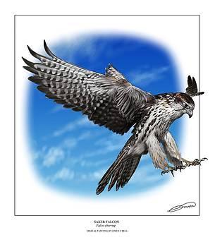 Saker Falcon stooping by Owen Bell