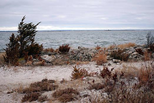 Harvey Barrison - Saltaire Bay