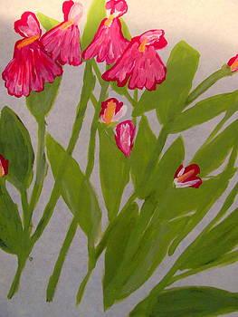 Salvia by Amy Bradley