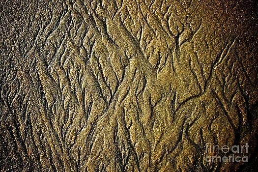 Sand Tree by Matthew Keoki Miller