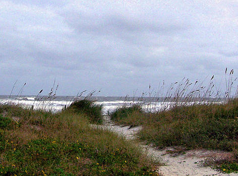 Patricia Taylor - Sandy Path to the Beach