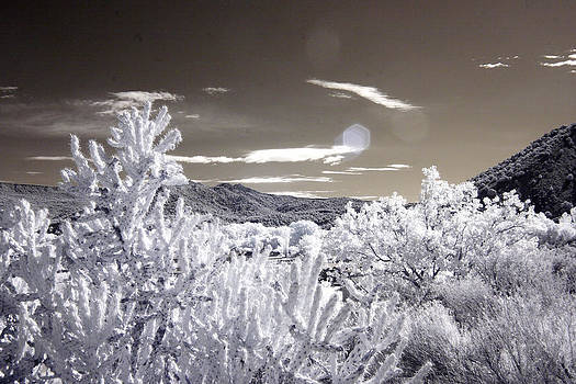 Santa Fe - 1 by T R Maines