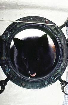 Don Kreuter - Santos Looking Through Porthole