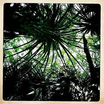 Sarasota Palms by Dyana Jean