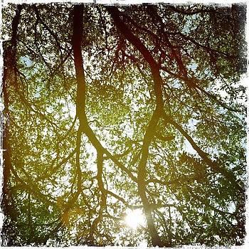 Sarasota Trees by Dyana Jean