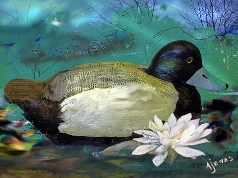 Amalia Jonas - Scaup Duck