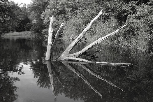 Scenes from the Kayak    Downed Trees of the EC river back waters by Artist Orange