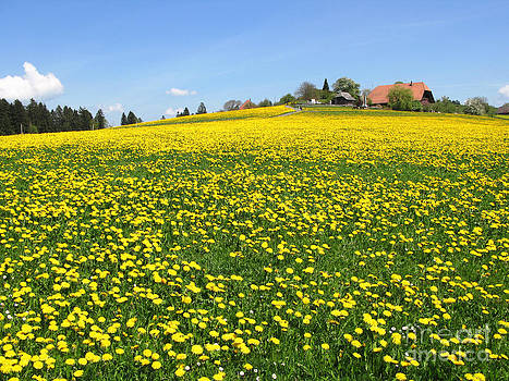 Scenic meadow by Alexander Chaikin