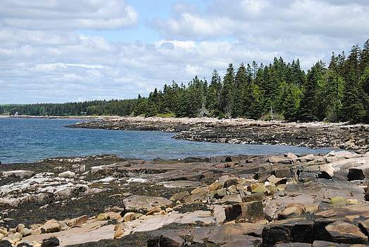Schoodic Peninsula  by Steven Scott