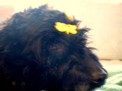 Scottie Dog Yellow Barrettes  by Amy Bradley