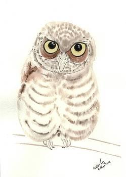 Screech owl chick by Wenfei Tong