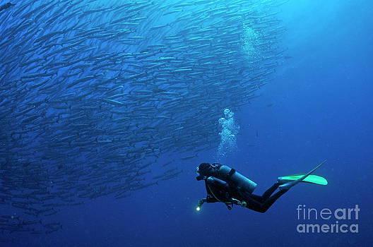 Sami Sarkis - Scuba Diver looking at a school of Blackfin Barracuda
