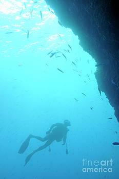 Sami Sarkis - Scuba diver looking at fishes