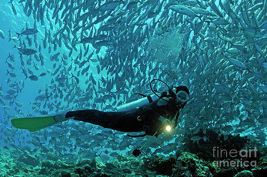 Sami Sarkis - Scuba diver shining a torch by coral reef