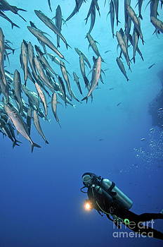 Sami Sarkis - Scuba Diver shining torch by a  school of fishes