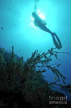 Sami Sarkis - Scuba Diver silhouette